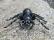 RC pavúk